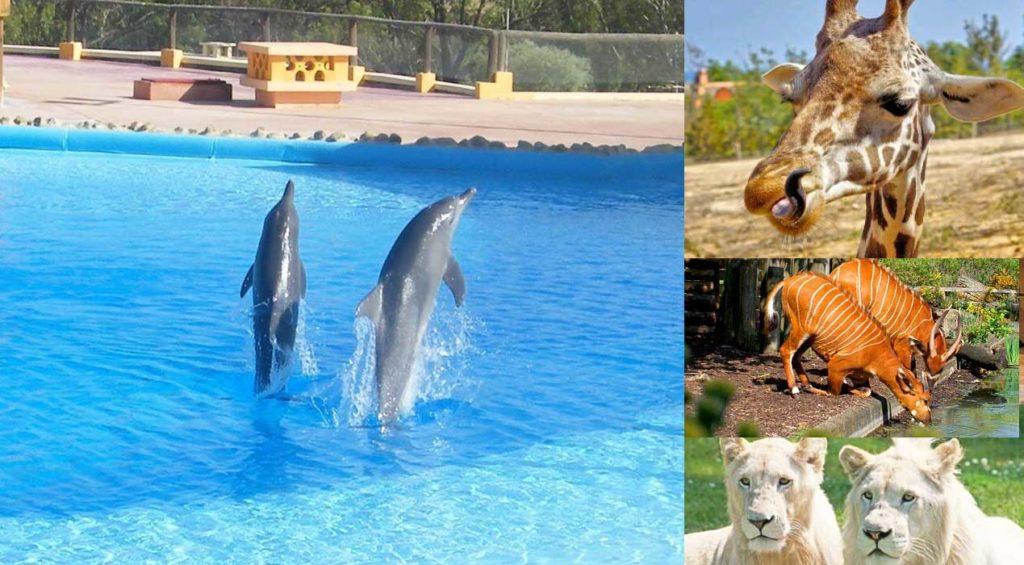 Friguia Park, une superbe activité pour vos vacances en Tunisie